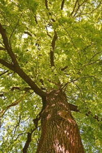 tree - positive thinking