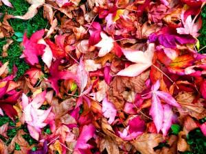 Dart leaves