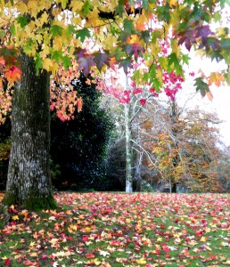 Dartington leaves