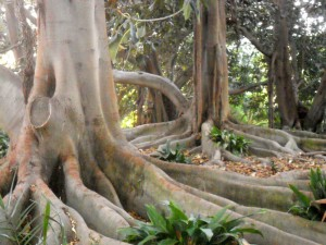 Grounding and growing roots at OSHO Sammasati