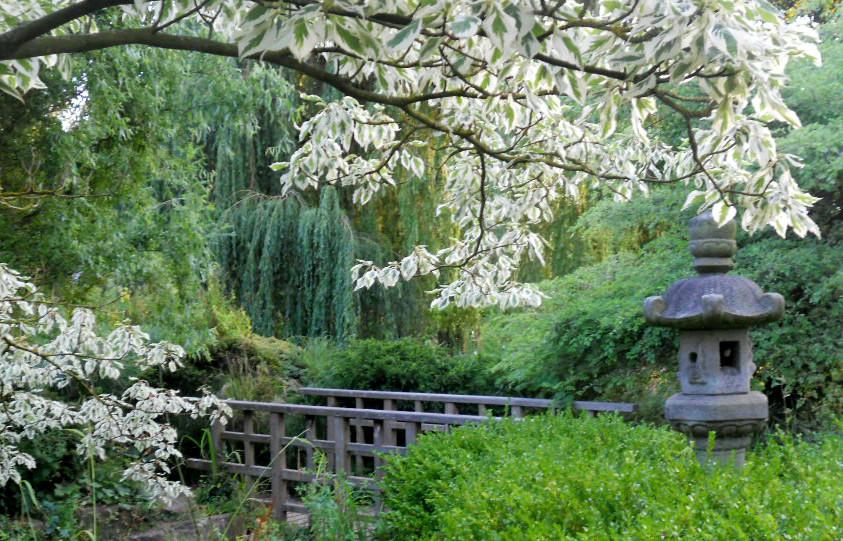 Special Points on Meditation at OSHO Samasati