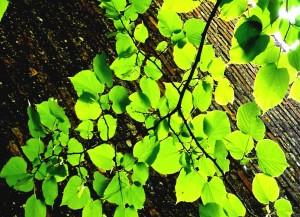 The Benefits of Meditation at OSHO Sammasati