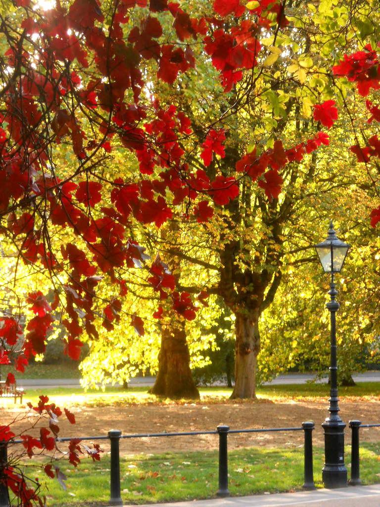 arbor red vine lamppost