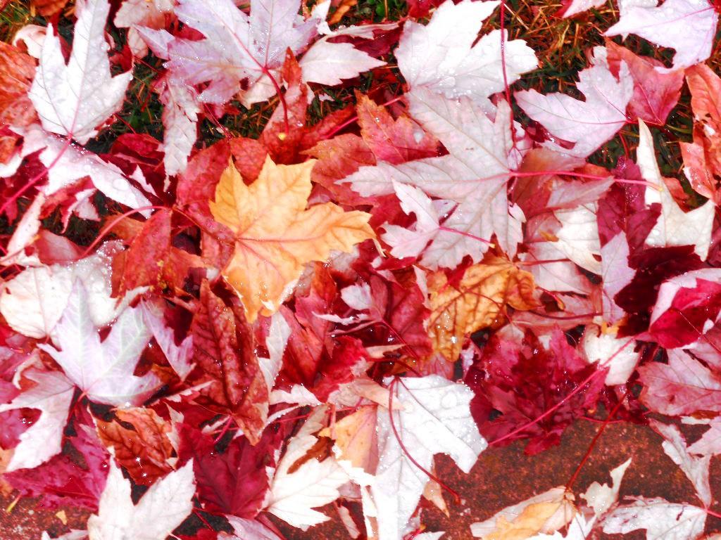 autumn leaves Bel marin Keys