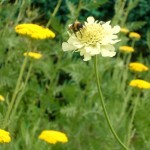 Bee on a flower meditation