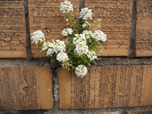 Resilience crevice flowers
