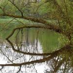 Reflections - Vondel Park April 2014