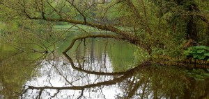 Reflections - Vondel Park April 2014