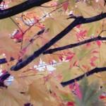 dark limbs faded pink leaves