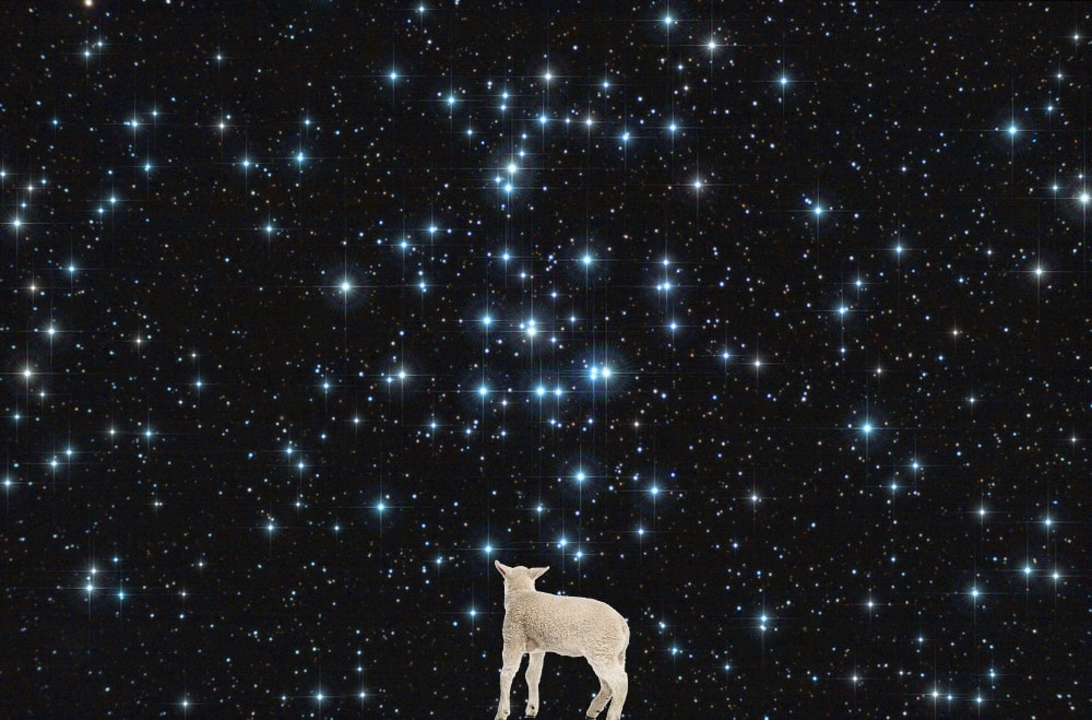Night sky with lamb